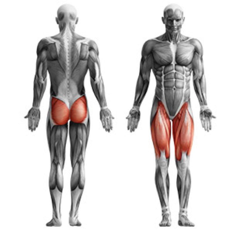 MS-U106_muscles